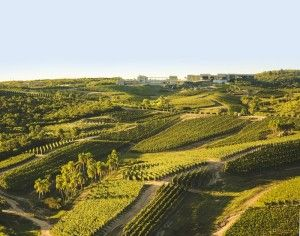 Bodega Garzón Vineyards