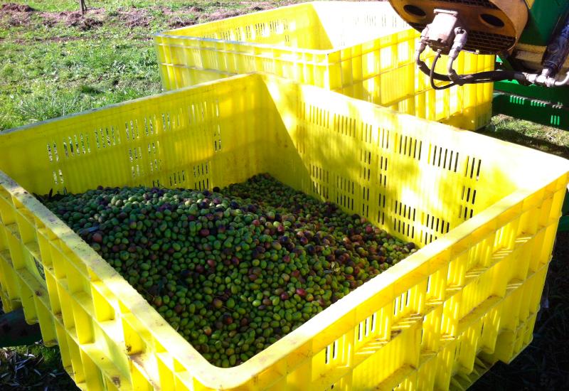 propiedades del aceite de oliva 2