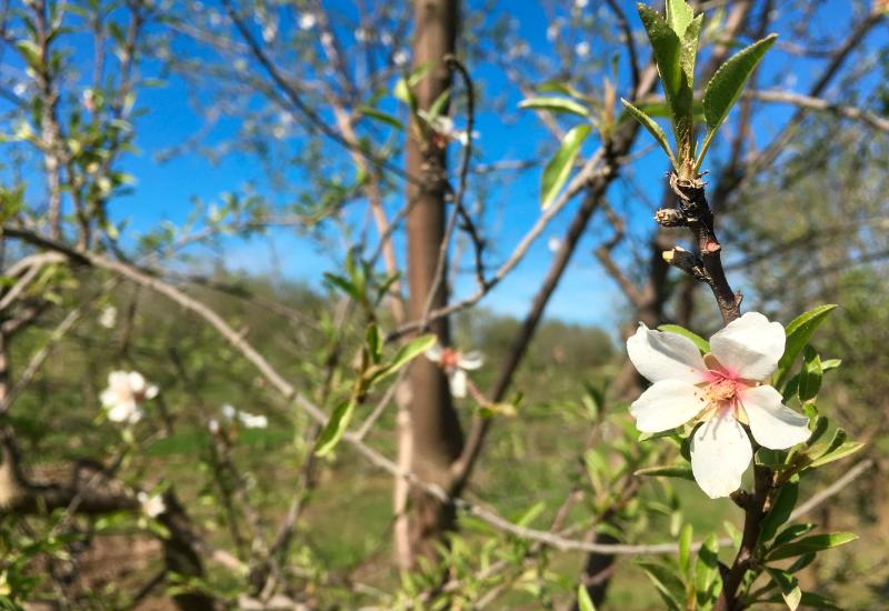 Primavera en Uruguay
