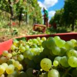 Sabores del vino