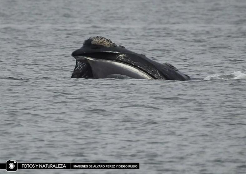 ballenas punta del este