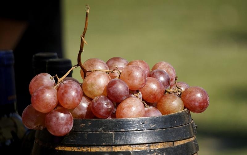 maduracion del vino