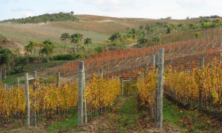 Uruguay y el vino