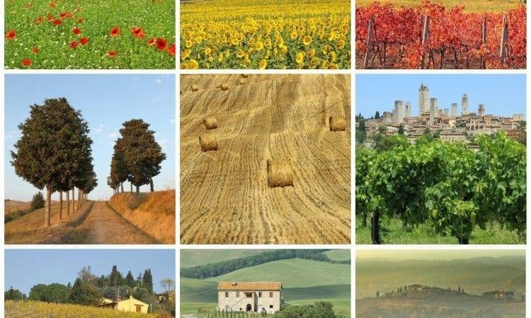 Vinos del mundo: Italia