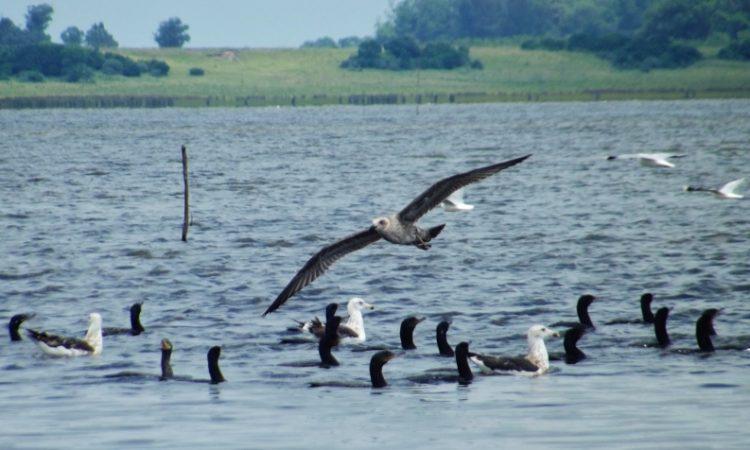 Laguna de Rocha, refugio de aves y Reserva de la Biosfera