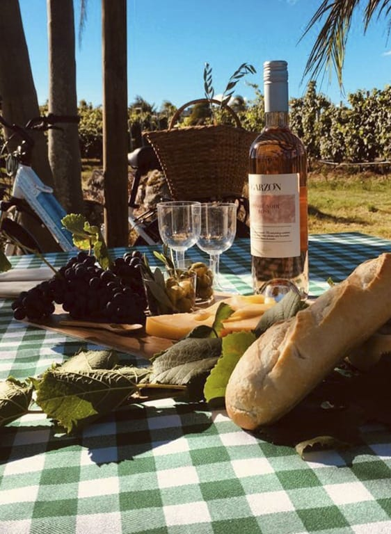 Enjoy a picnic among the vineyards and a walking or cycling tour