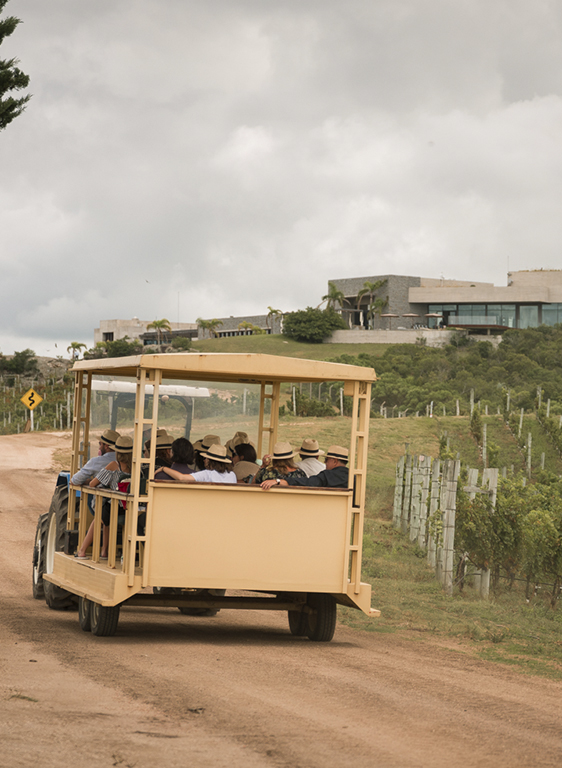 Enjoy the magnificent view and visit the winery while tasting wines from the Reserva line