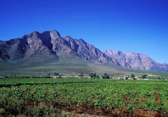 Vinos del mundo, Sudáfrica