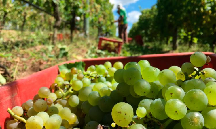 Sabores del vino: de dónde vienen y cómo identificarlos