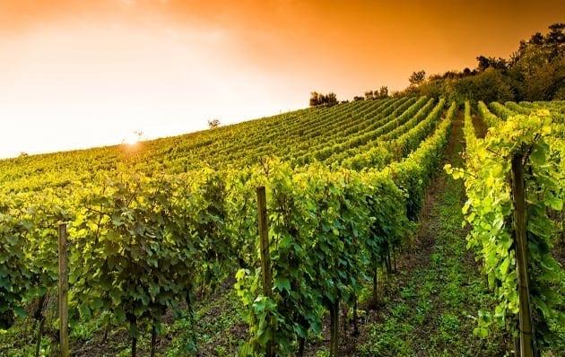 La Ruta de la Uva y el Vino de Brasil