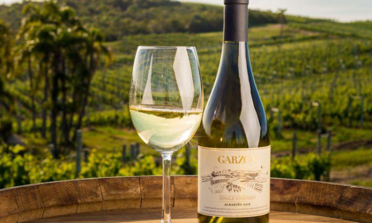 Las cepas de vino más populares de Uruguay