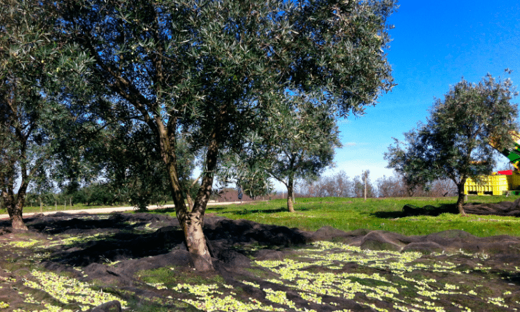 Comienza la temporada de cosecha en Bodega Garzón