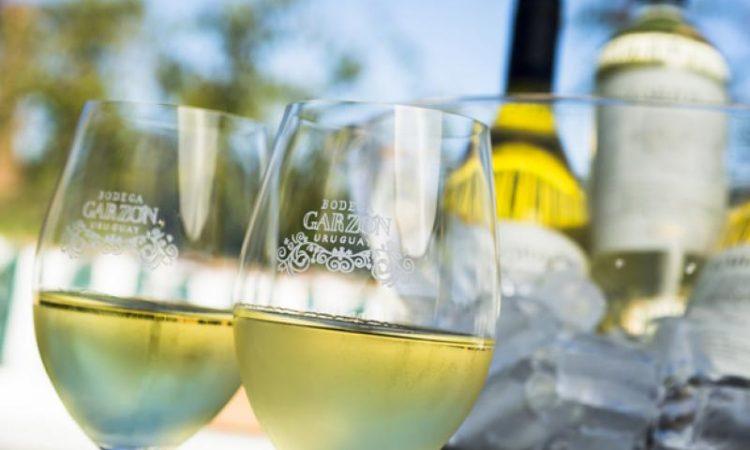 Enfriar un vino: 5 formas de hacerlo correctamente