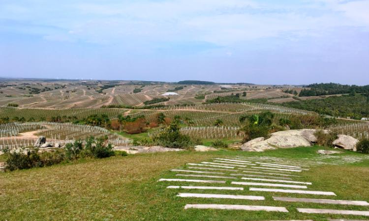 Mapa de las rutas del vino en Uruguay