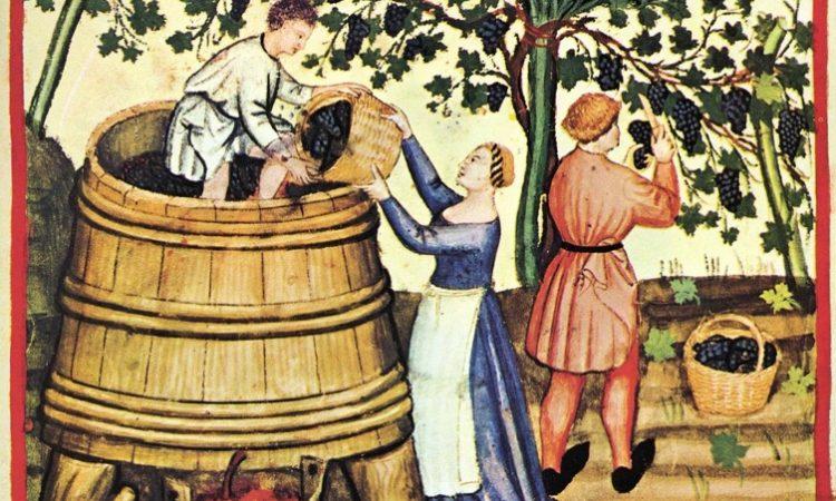Cicuito productivo del vino: conocé el proceso de producción