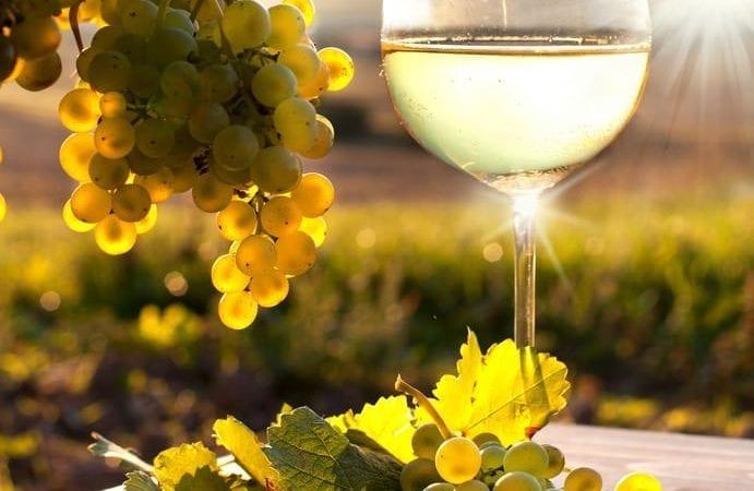 La uva y su transformación en vino