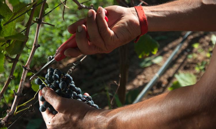 Vinos de calidad de Uruguay: descubra los vinos de Bodega Garzón